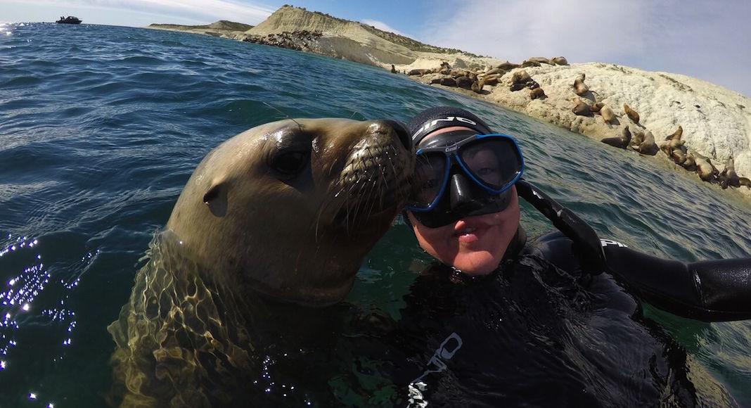 Snorkeling con lobos