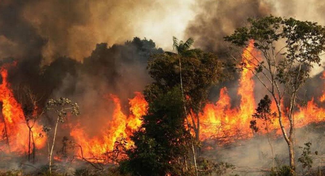Incendio en El Amazonas