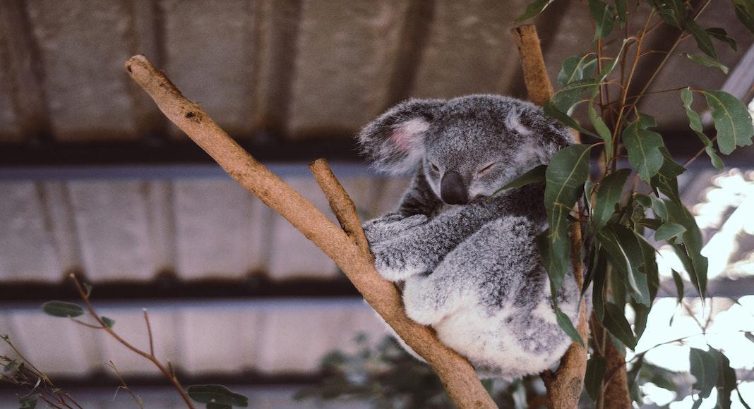 guia para viajar a australia