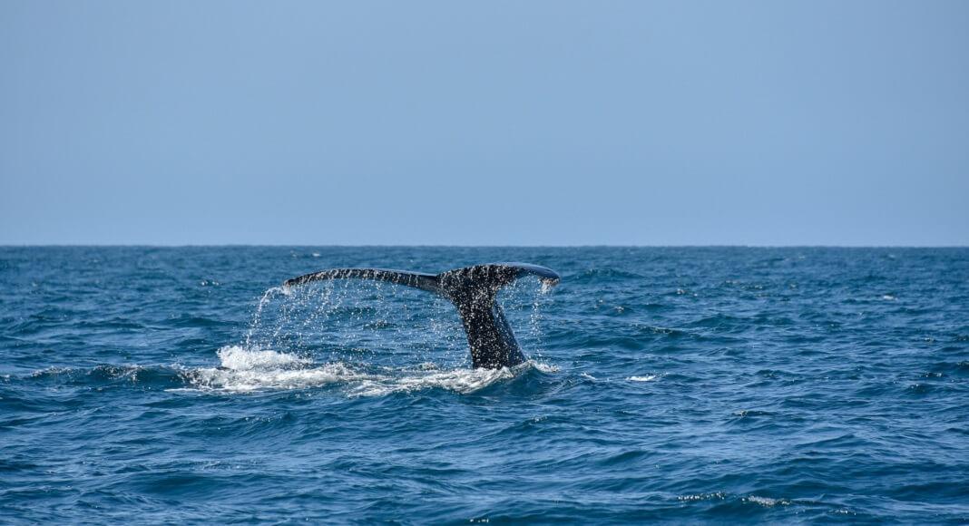 Ballena en Océano. Centro especializado en ciencias oceánicas