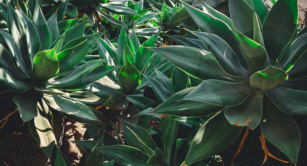Plantas en Qué ver en Mónaco.